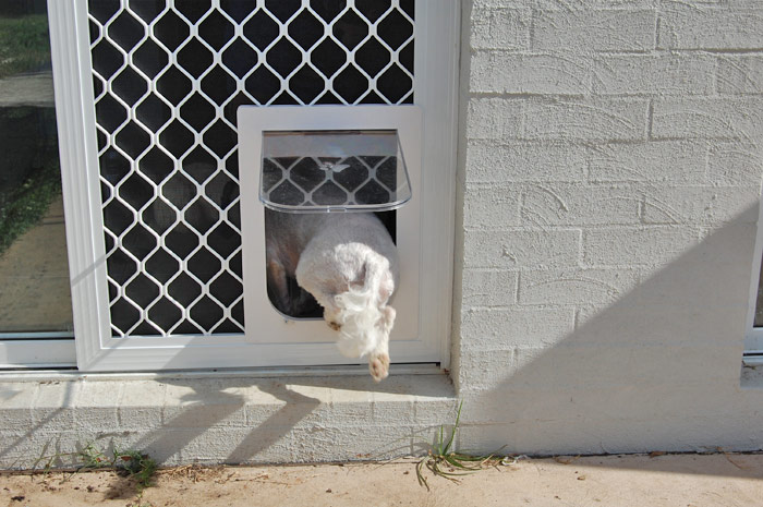 Dog - Cat Doors